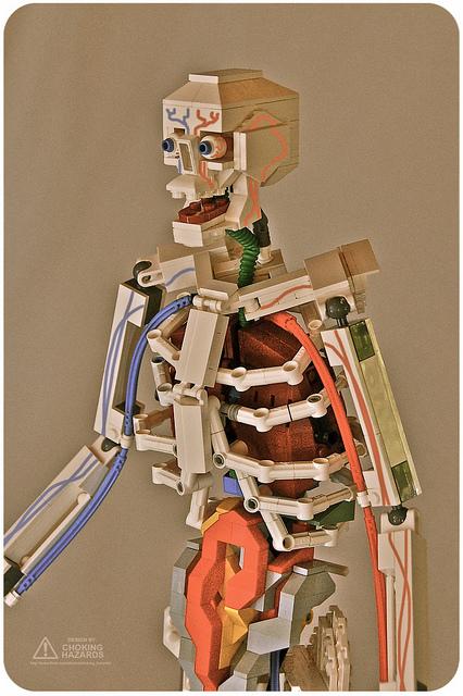 Anatomy squeleton