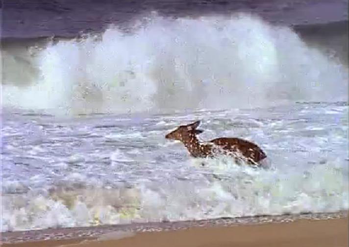 aan-zee